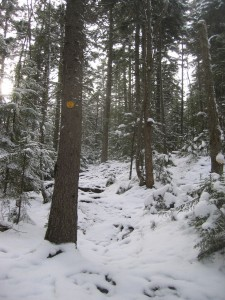 Snow covered trail in evergreen forest