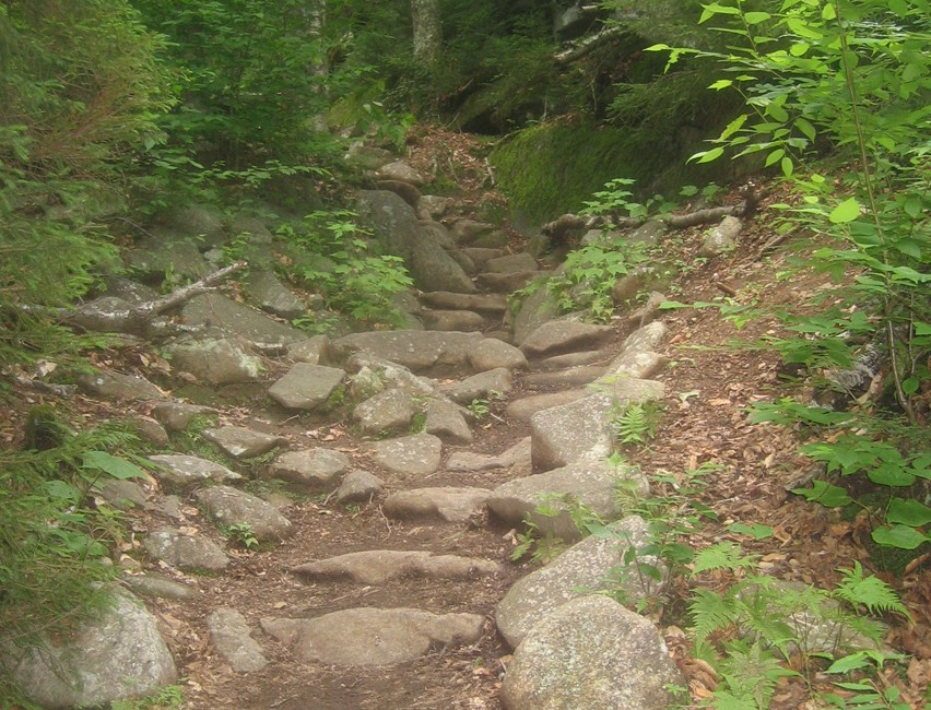 Stone steps leading up through a dense forest