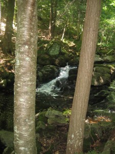 Small waterfall seen through trees along Peaked Mountain brook