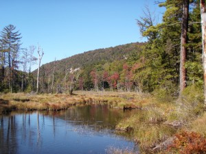 wild adirondack lake with wetland and mountain in the background
