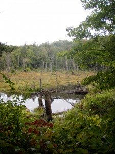 Broad wetland at the end of the Groff Creek trail