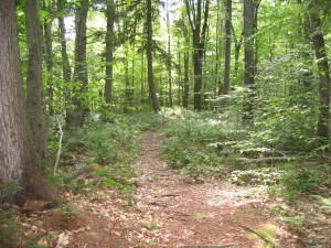 Forest along Floodwood Trail