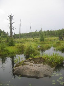 A beaver meadow. A common site along the high Falls loop and the Northern Adirondacks