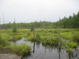 Wetland created by beaver activity in the Northern Adirondacks
