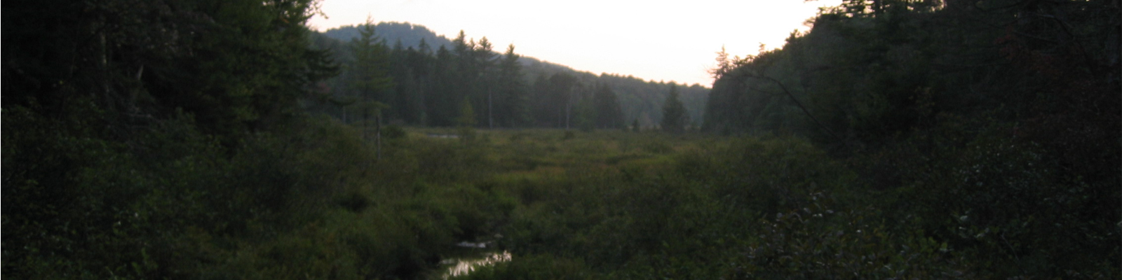 Wetland at teh outlet of Cascade Lake