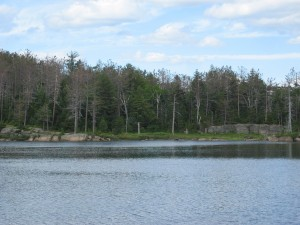 Crane Mountain Pond
