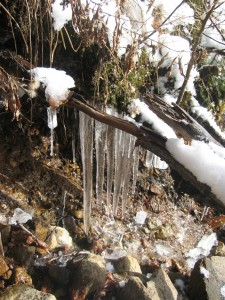 Icicles Along trail
