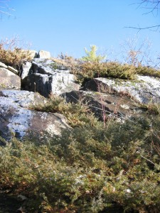 Juniper bushes along climb to Little Crow