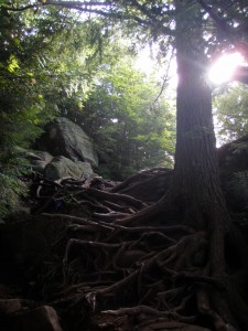 Tree roots acting as steps along the Panther Mountain Echo Cliffs trail