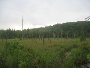 One of Many Wetlands Along Trail