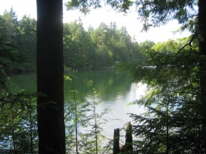 Pond along Floodwood Loop
