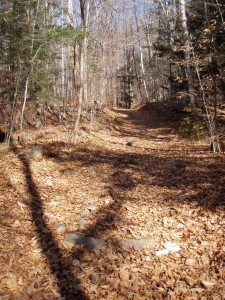 Trail leading to sleeping beauty mountain in fall after the leaves have fallen