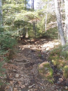 Section of worn trail as you near the summit