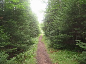 Trail to Cat Mountain in the Northern Adirondacks