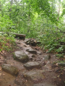 Cobble steps along trail leading to Chimney Mountain