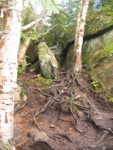 Tanlge of tree roots along the trail