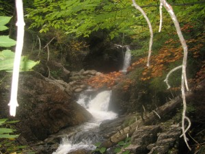Wedge Brook Cascade with fallen leaves