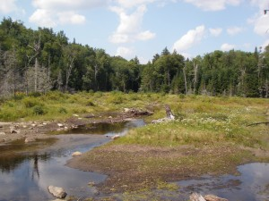 Wetland along shanty brook in the Central Adirondacks