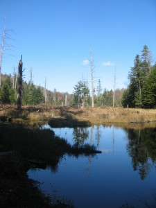 Wetland know as Big Marsh in the Central Adirondacks