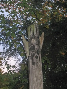 Wooden ultility pole that appears to have owls horns