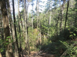 Rugged forest in the Adirondack high peaks